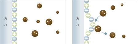 無光触媒の抗菌・防カビ効果